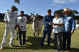 Reservada Campeã Novilha Menor da Raça Guzerá na 84ª Expozebu